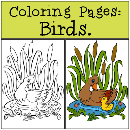 duckling: Coloring Pages: Birds. Mother duck with her little cute duckling. Illustration