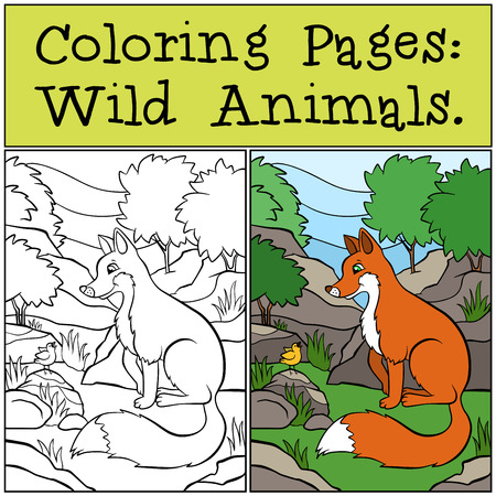 singing bird: Coloring Pages: Wild Animals. Little cute fox sits and looks at singing bird.