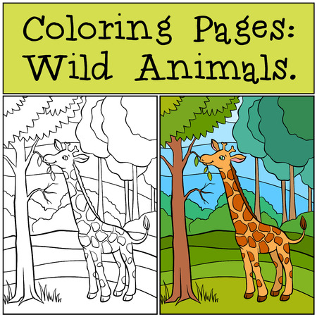 eats: Coloring Pages: Wild Animals. Little cute giraffe stands in the forest and eats leaves. Illustration