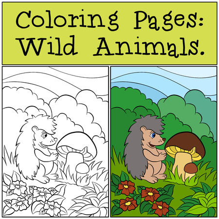 dibujos para colorear: P�ginas para colorear: animales salvajes. Cute poco erizo mira a las setas.