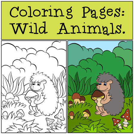 coloration: Coloring Pages: Wild Animals. Little cute hedgehog holds mushroom in the hands.