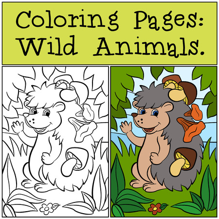 dibujos para colorear: Coloring Pages: Wild Animals. Little cute hedgehog has mushrooms in the needles. Vectores