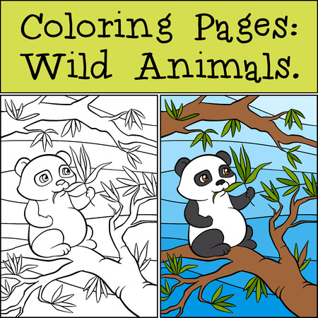 eats: Coloring Pages: Wild Animals. Little cute pands sits on the tree and eats leaves. Illustration
