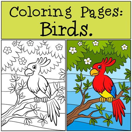 parakeet: Coloring Pages: Birds. Little cute parrot sits on the tree branch and smiles.