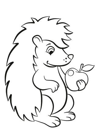 Malvorlagen. Kleine nette Art Igel sitzt und hält einen Apfel in der Pfote. Es lächelt. Standard-Bild - 57464663