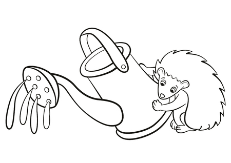 water's: Coloring pages. Little cute hedgehog holds watercan in the paws and waters something. Illustration