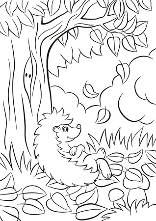 Coloring pages. Little cute kind hedgehog sits near the tree. Its autumn. The leaves fall from the tree. There are bushes, plants, grass and mushrooms around. The hedgehog is happy.