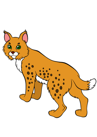 lynx: Cartoon wild animals for kids. Cute beautiful lynx stands and smiles.