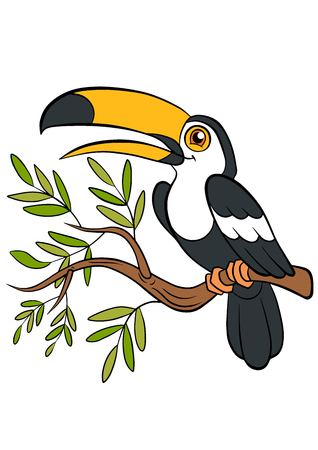 tucan: Cartoon birds for kids. Little cute toucan sits on the tree branch and smiles.