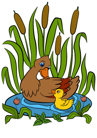 duckling: Color pictures: birds. Mother duck swims with her little cute duckling in the pond. They are smile and happy. Illustration