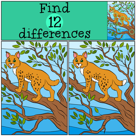 lynx: Children games: Find differences. Little cute lynx stands on the tree branch and smiles.