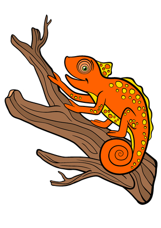 Cartoon animals for kids. Little cute orange chameleon sits on the tree branch and smiles.