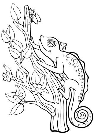 Páginas Para Colorear. Animales Salvajes. Pequeño Camaleón Lindo ...