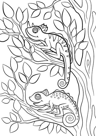 coloration: Coloring pages. Wild animals. Two little cute chameleon sits on the tree branch.