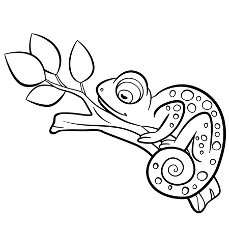coloration: Coloring pages. Wild animals. Little cute chameleon sleeps on the tree branch.