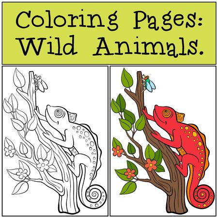 Páginas Para Colorear: Animales Salvajes. Pequeño Camaleón Rojo ...