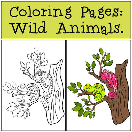 two animals: Coloring Pages: Wild Animals. Two little cute chameleons sits on the tree branch.