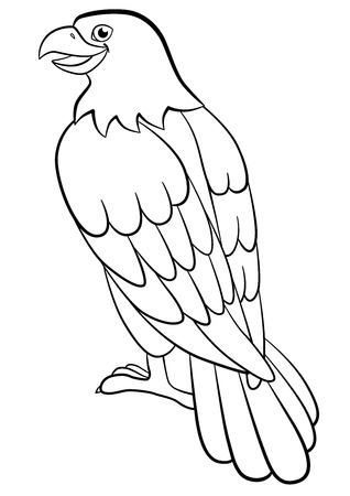 young american bald eagle stock photos & pictures. royalty free ... - American Bald Eagle Coloring Page