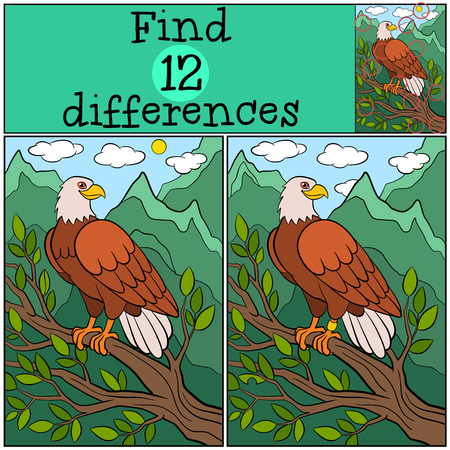 bald spot: Children games: Find differences. Cute bald eagle sits on the tree branch and smiles.