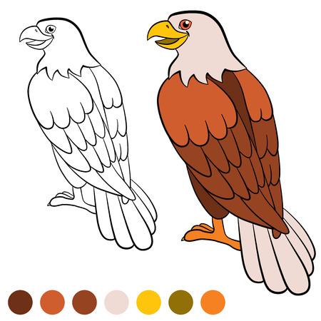 Dibujo Para Colorear. Color Me: águila. águila Calva Lindo Se Sienta ...