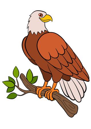 cartoon eagle: Cartoon birds for kids: Eagle. Cute bald eagle sits on the tree branch and smiles.