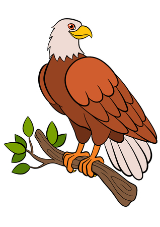 Cartoon birds for kids: Eagle. Cute bald eagle sits on the tree branch and smiles.