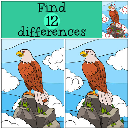 Children games: Find differences. Cute bald eagle sits on the top of the rock and smiles.