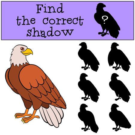 birds silhouette: Children games: Find the correct shadow. Cute bald eagle sits and smiles.