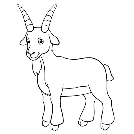 billy: Coloring pages. Farm animals. Cute billy goat stands and smiles.