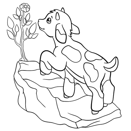 billy: Coloring pages. Farm animals. Little cute goatling stands on the rock and looks at the flower.