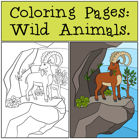 capra: Coloring Pages: Wild Animals. Cute ibex with great horns stands on the rock and eat leaves.