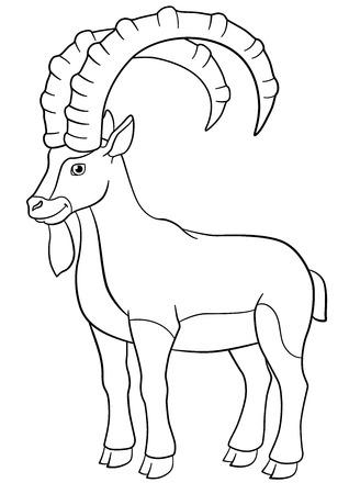 Malvorlagen. Netter ibex mit großen Hörnern steht und lächelt.