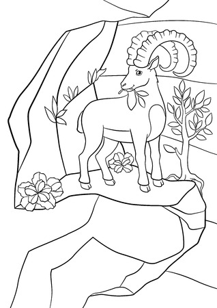 capra: Coloring pages. Cute ibex with great horns eat leaves on the rock.