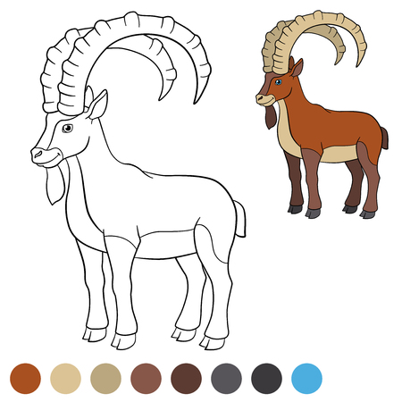 capra: Color me: ibex. Cute ibex with great horns smiles.