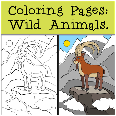 capra: Coloring Pages: Wild Animals. Cute ibex stands on the rock.