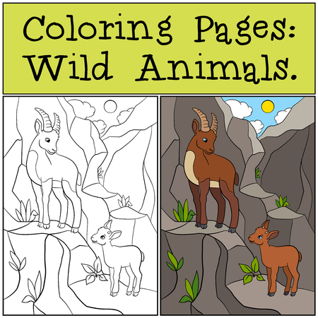 capra: Coloring Pages: Wild Animals. Mother ibex with her little cute baby ibex on the rocks. Illustration