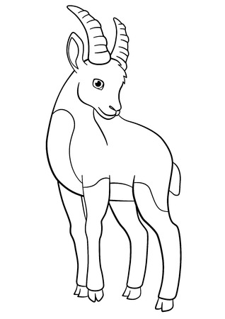 capra: Coloring pages. Little cute ibex smiles. Illustration