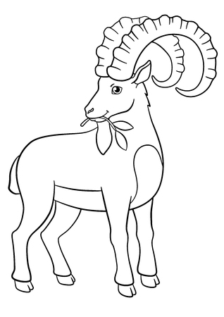 capra: Coloring pages. Cute ibex with great horns eat leaves.