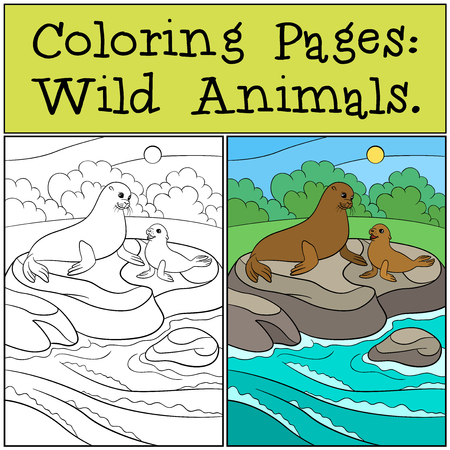 fur seal: Coloring page with example. Mother fur seal with her little cute baby lay on the rocks and smile. Illustration
