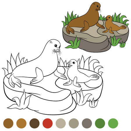 fur seal: Coloring page with colors. Mother fur seal with her little cute baby on the stone. Illustration
