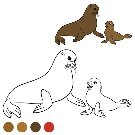 fur seal: Coloring page with colors. Mother fur seal with her little cute baby. Illustration