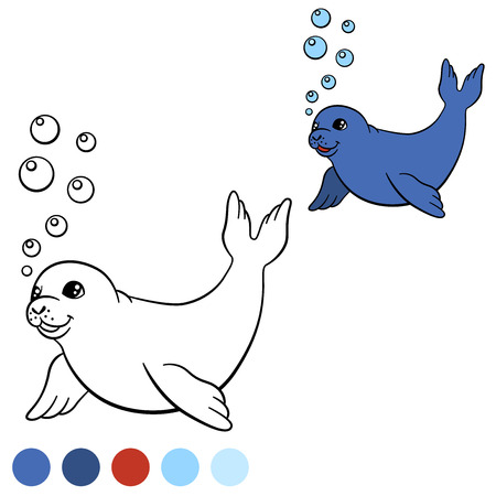 baby seal: Coloring page with colors. Little cute baby seal swims and smiles.