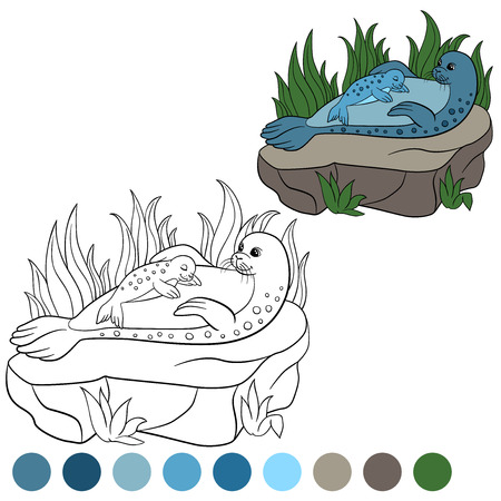 baby seal: Coloring page with colors. Mother seal with her little cute baby seal lay on the stone.