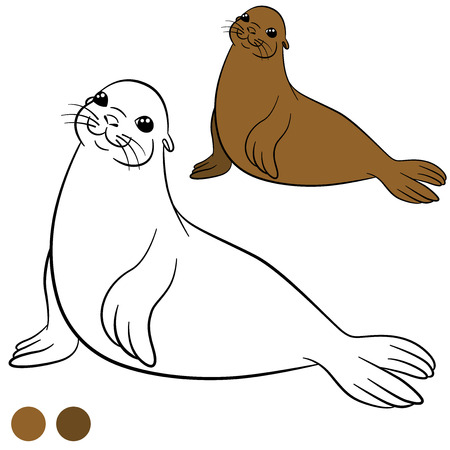 fur seal: Coloring page with colors. Little cute brown fur seal smiles.