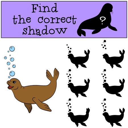 fur seal: Educational game: Find the correct shadow. Little cute fur seal swims. Illustration