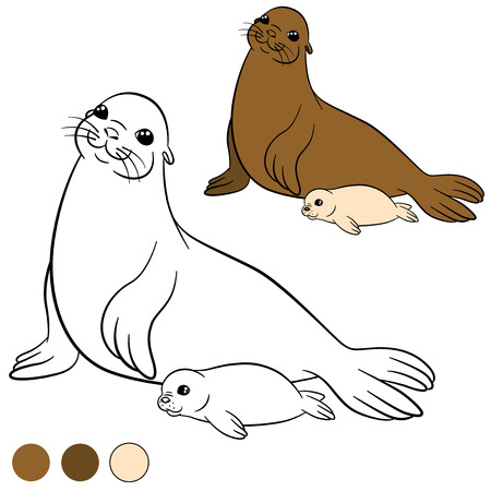 Coloring page with colors. Mother fur seal with her little cute white-coated baby seal. Illustration