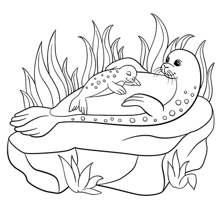 baby seal: Coloring pages. Mother seal with her little cute baby seal on the stone. Illustration