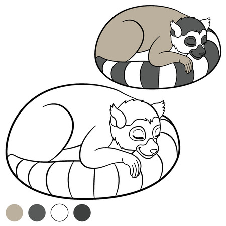 Color me: lemur. Little cute lemur sleeps and smiles.