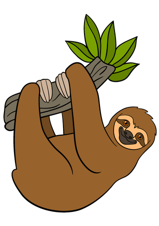 Cartoon animals. Cute lazy sloth hangs on the tree branch and smiles.