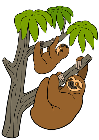 Cartoon animals. Mother sloth and her little cute baby hang on the tree branch and smile. Illustration